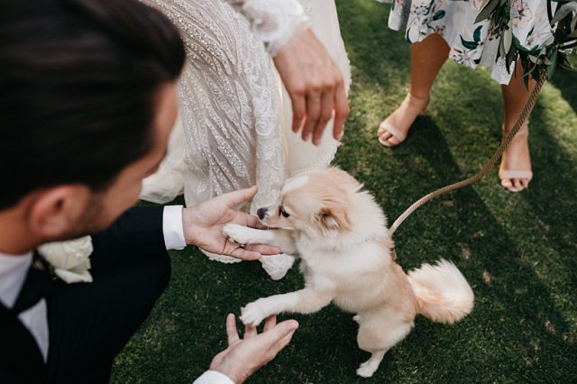 318 Dog Wedding Ceremony Perth Ashleigh Jade