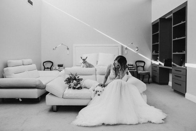 Bride With Fur Babies Fremantle Wedding