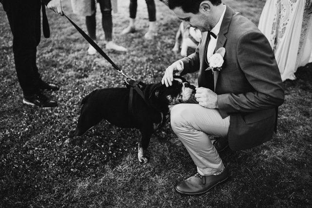 Dog Wedding Perth